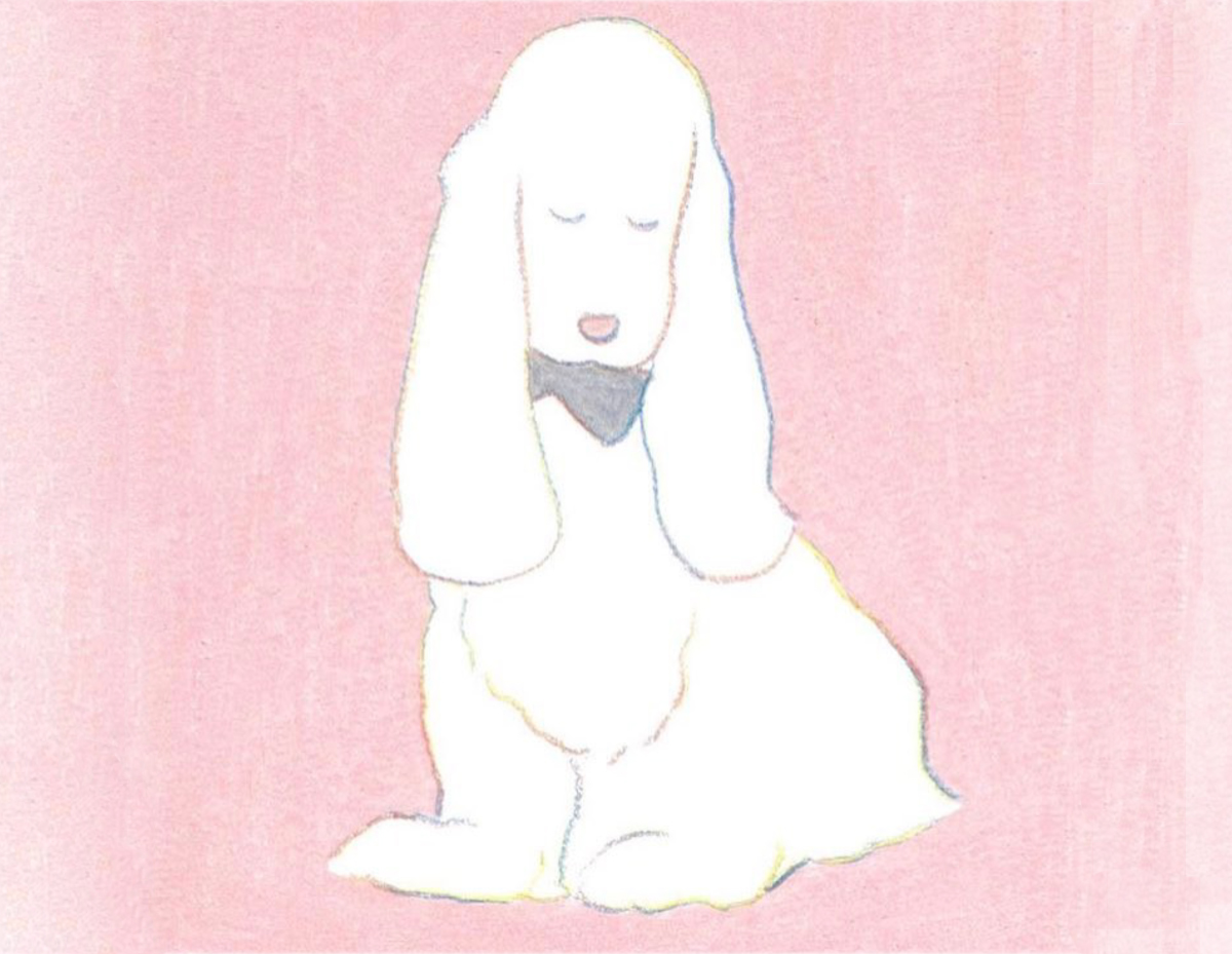 Cooper spaniel, illustration by Teraoka Natsumi (c)