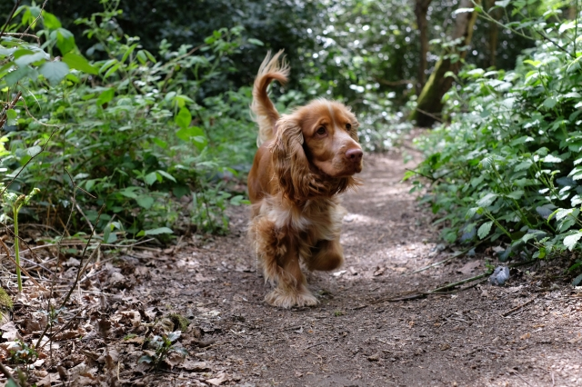 5 Things That Can Be Dangerous For Dogs In Autumn Perfect Cocker