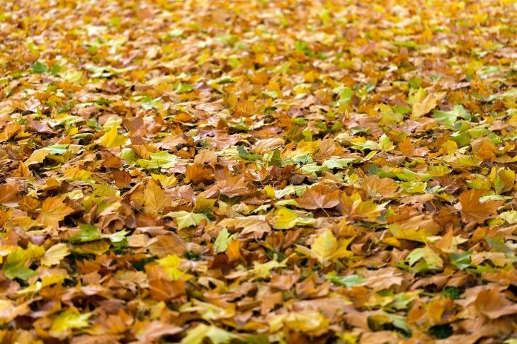 toxic-plants-dogs-leaves-perfectcockerspaniel-blog
