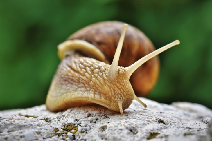 Slugs and snails dangerous for dogs, first aid advice, help / published on Perfect cocker spaniel blog / Image by Capri23Auto from Pixabay