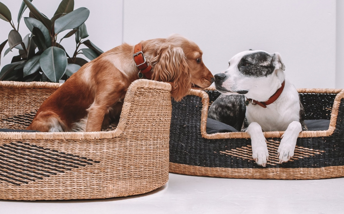You & Lou luxury designer woven straw dog basket beds / review first published on Perfect cocker spaniel blog (C)
