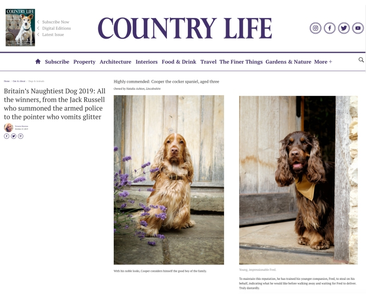Cooper & Fred, Perfect cocker spaniel cockers on Country Life magazine website / britain's naughtiest dogs 2019 by Victoria Marsden / Natalia Ashton / english cocker spaniel humour, advice, tips, history, puppy first year, grooming and more, book and blog