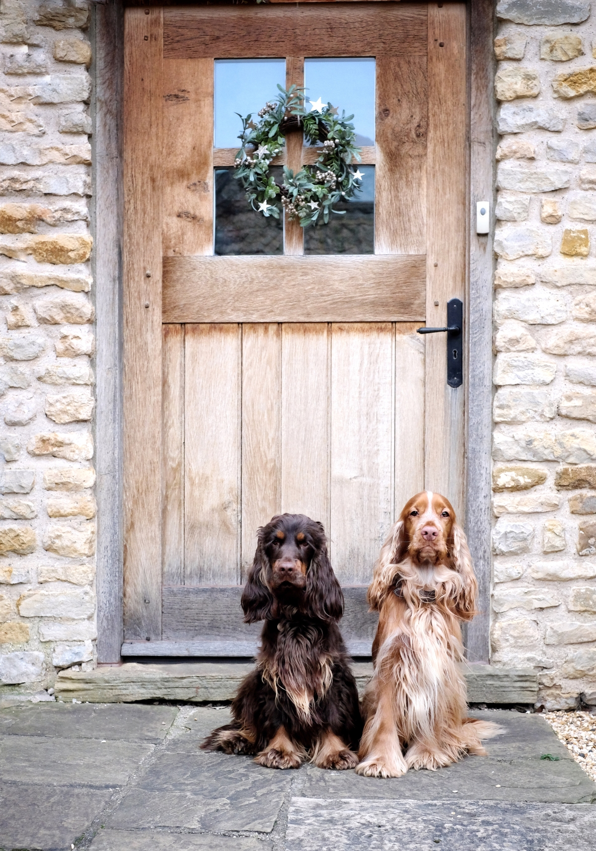 Cooper and Fred english cocker spaniels / Perfect cocker spaniel book and blog / cocker spaniel tips, advice, diet, puppy tips, cocker spaniel grooming, how to hand-strip cocker spaniel / (C) Natalia Ashton