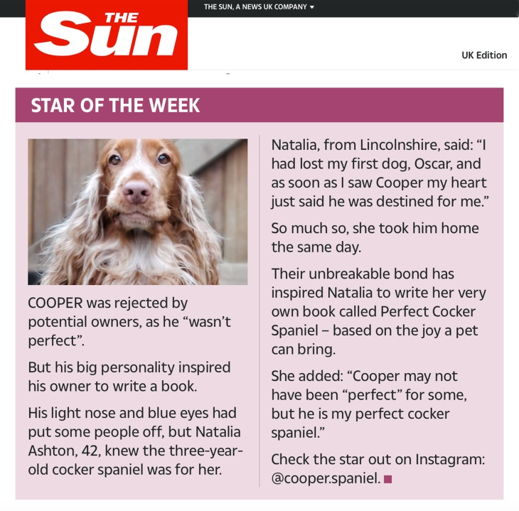 Cooper Perfect cocker spaniel breed and puppy guide English cocker spaniels featured in the sun newspaper