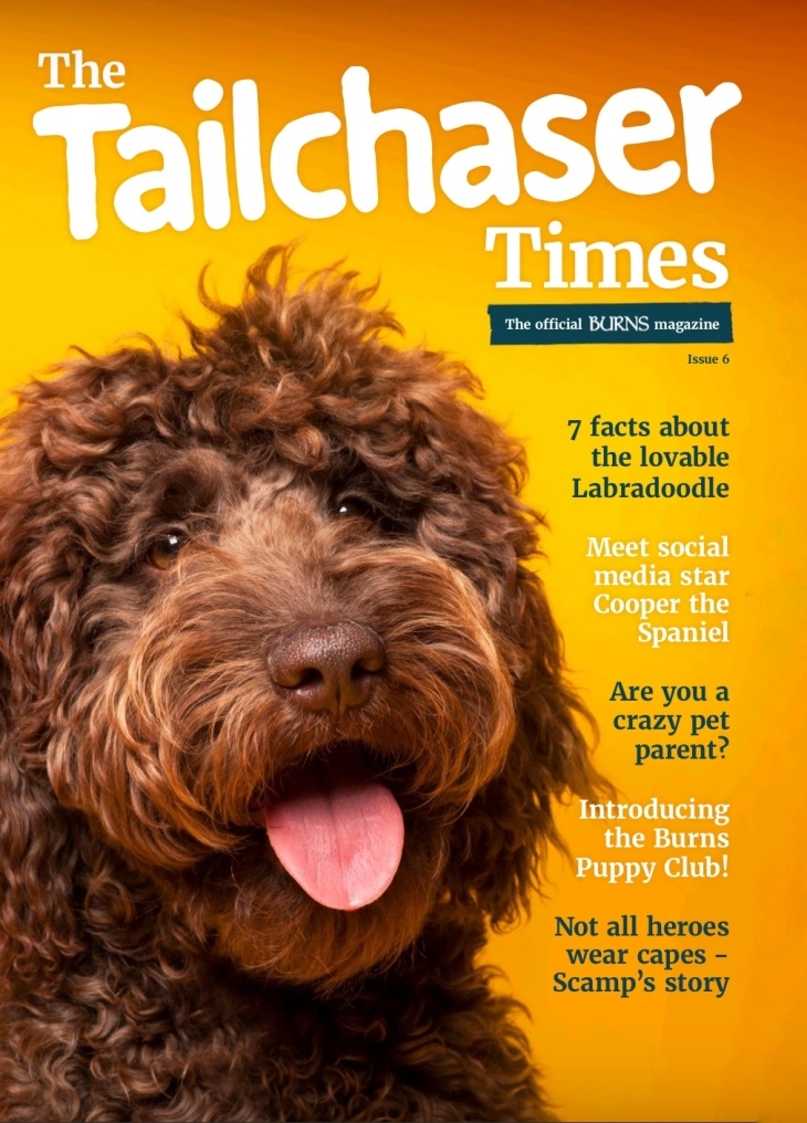 Perfect cocker spaniel book featured in Burns Tailchaser Times magazine / bestseller breed & puppy guide / best books about English cocker spaniels / puppy advice, tips, diet, training, grooming book / dog pet blog / Natalia Ashton