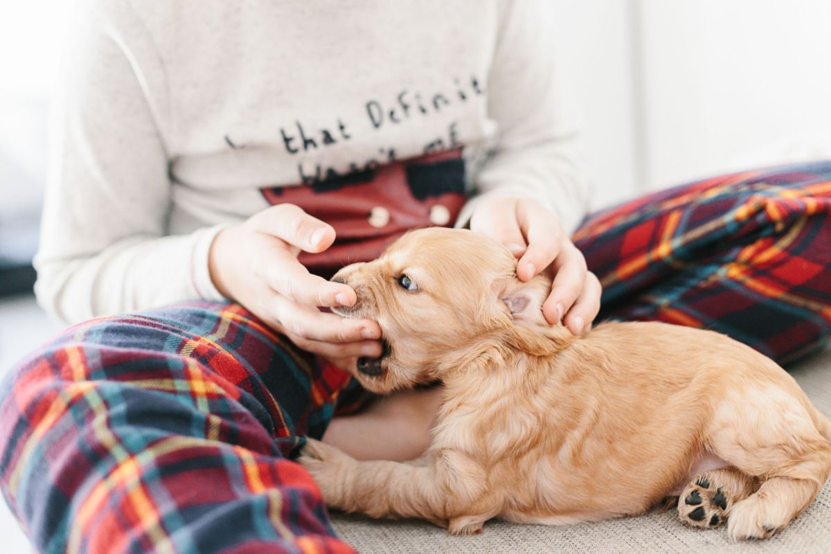 How to stop puppy mouthing and biting / tips and training for English cocker spaniel puppy / dog blog / puppy training / Perfect cocker spaniel (C) Natalia Ashton