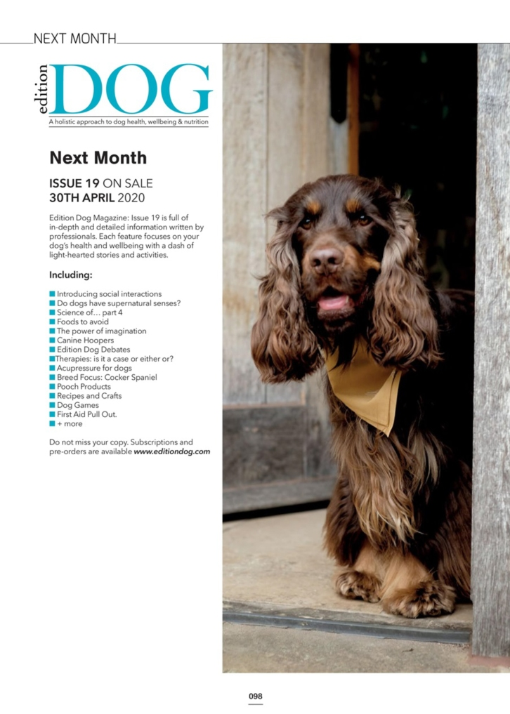 Perfect cocker spaniel featured in Edition Dog magazine April 2020 issue / Fred photographed by Natalia Ashton / Perfect cocker spaniel guide to the breed, dog blog, how to groom English cocker spaniel, cocker spaniel diet, health, training, puppy tips / written by dog expert, author & canine nutritionist / (C) Natalia Ashton