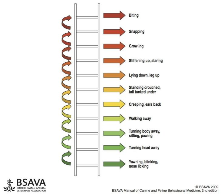 Dog's body language / ladder of aggression by BSAVA / reactivity in dogs explained / Perfect cocker spaniel, dog blog & reactivity diary of living with reactive dog