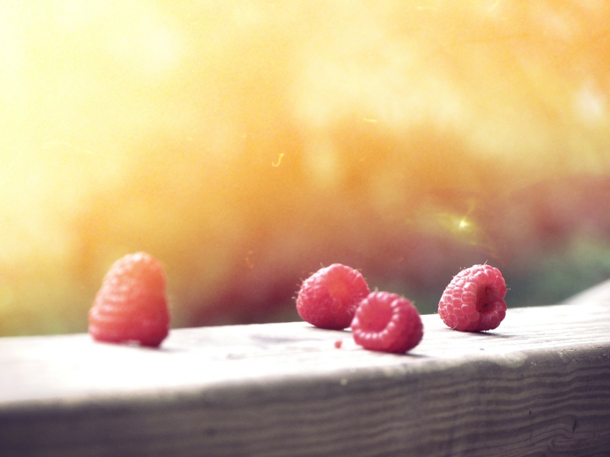 Can dogs eat raspberries? Fruits that contain xylitol and toxic to dogs / Canine nutrition tips / Cocker spaniel nutrition and diet