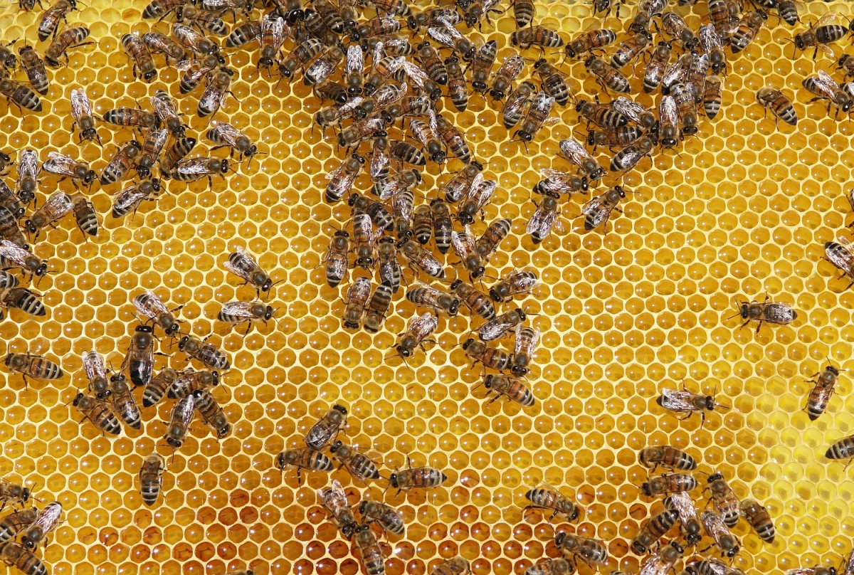 Benefits and risks of raw honey in canine diet / dog nutrition and healthy home made treats for dogs / canine nutritionist in UK / perfect cocker spaniel / dog blog about English cocker spaniels, tips on grooming, hand-stripping, diet, nutrition, food, health, raising a cocker spaniel puppy (C) Natalia Ashton